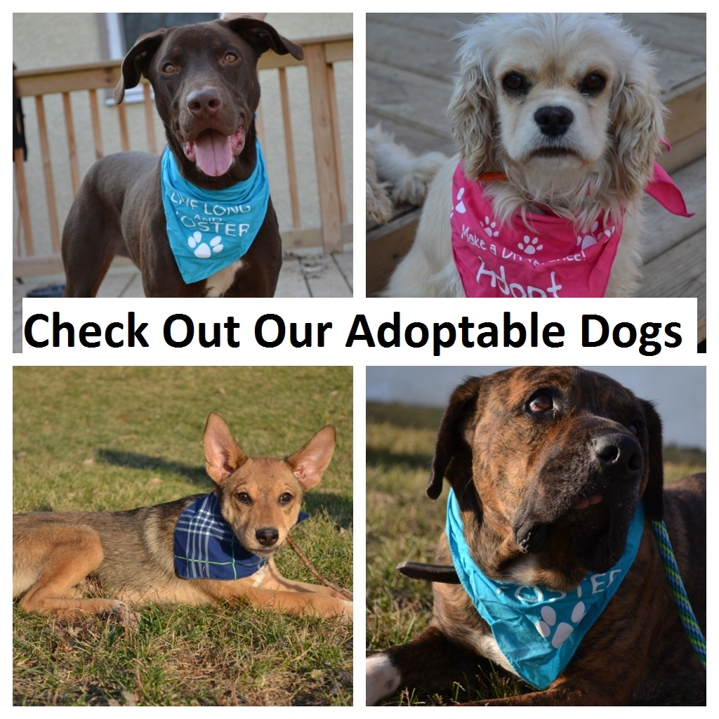 Adoptable Dogs