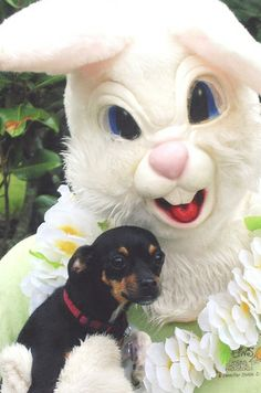 Events hop on down with your pet for a photo with the easter bunny solutioingenieria Image collections