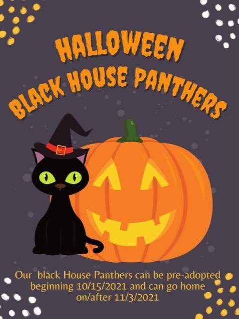 Panther-Halloween Adoptions