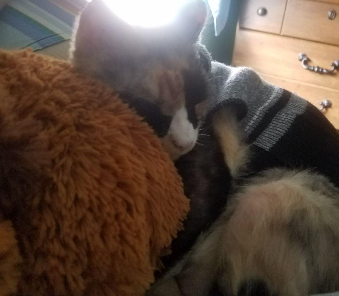 Meow6