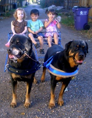 rotties-carting