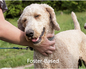 Foster Based