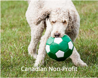 Canadian Non-Profit