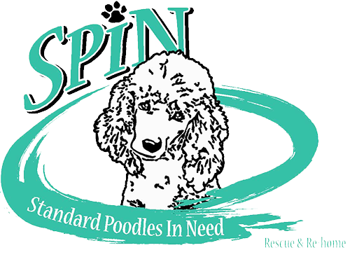 Standard Poodles In Need