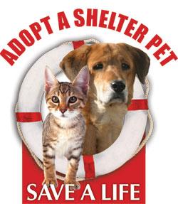 Forever Home Pet Rescue Virginia Beach