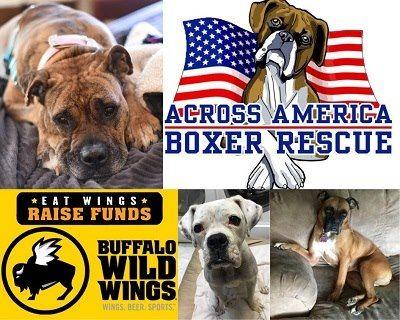 Across America Boxer Rescue