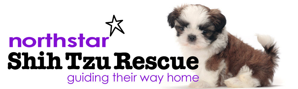 Northstar Shih Tzu Rescue