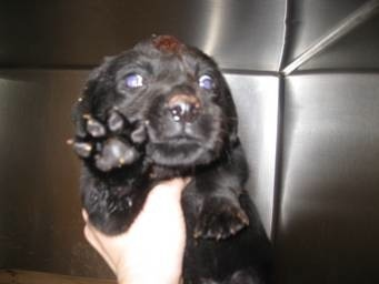 6 week old puppy with an abcess on his head scheduled to be put to sleep in a shelter for overcrowding