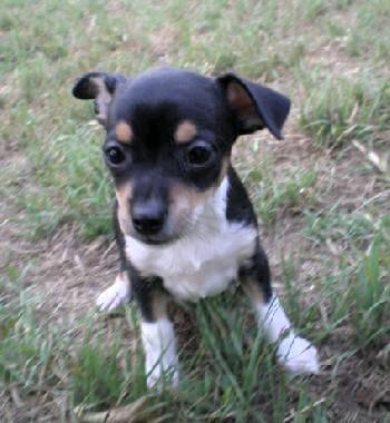Dimitri puppy