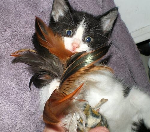 bodie with feathers