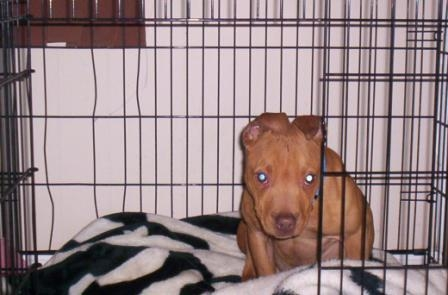Red in a wire crate