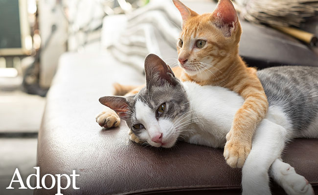 Adopt - Together Cats