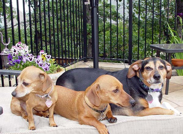 Brandy, Cooper & Roxie