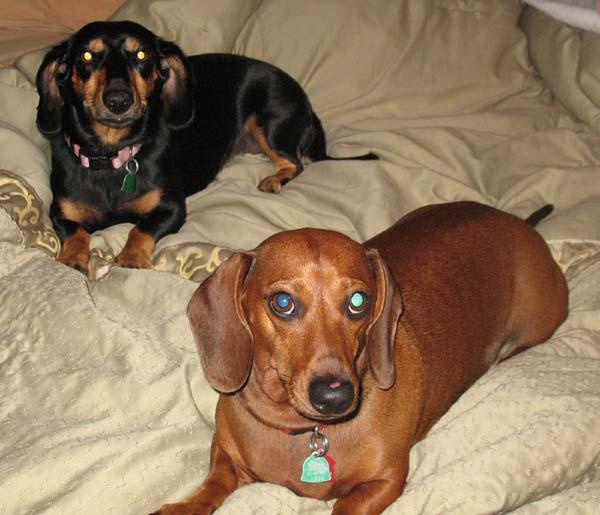 Roxie & Harley