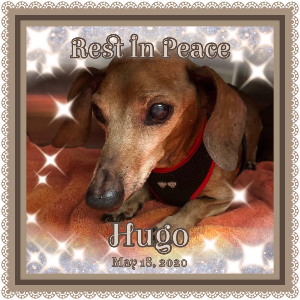 Hugo RB 2020