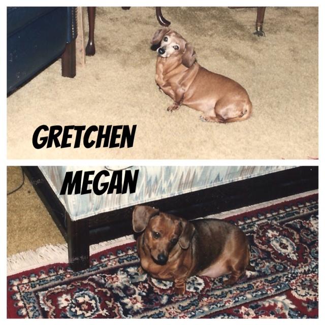Gretchen Megan MEM 2014