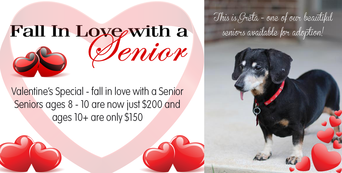 Valentines Seniors