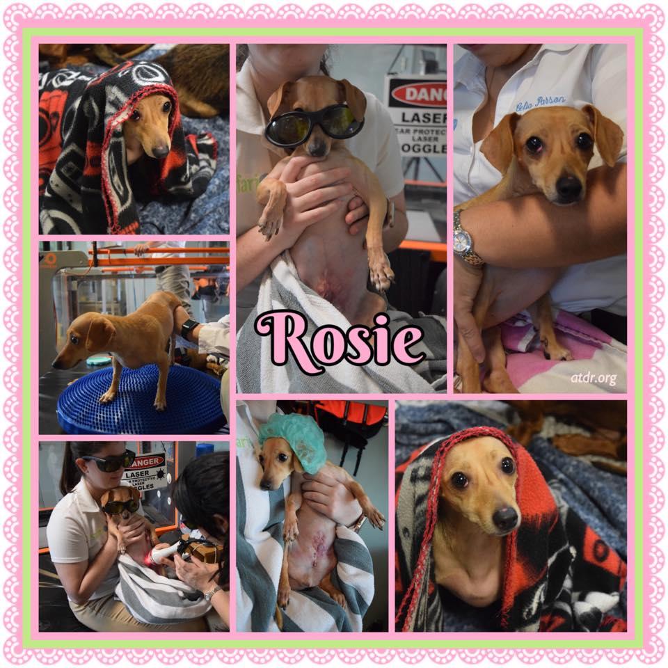 Rosie SN 2020 2