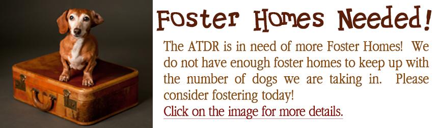 Foster Banner 2