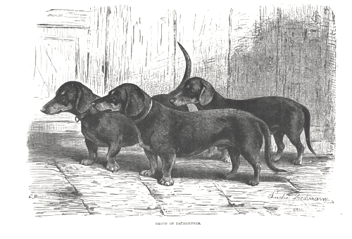 1800 Doxie 1