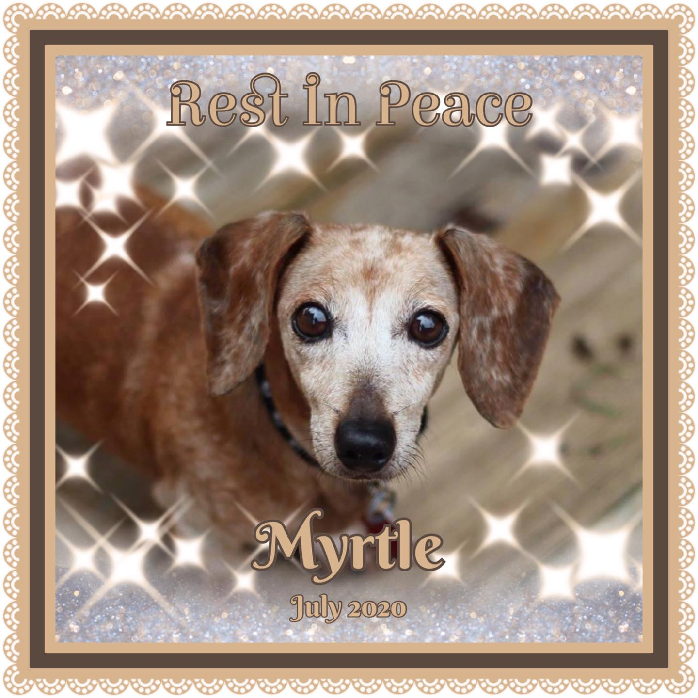 Myrtle MEM
