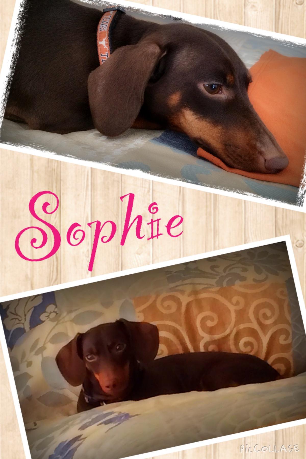Sophie MEM 2014