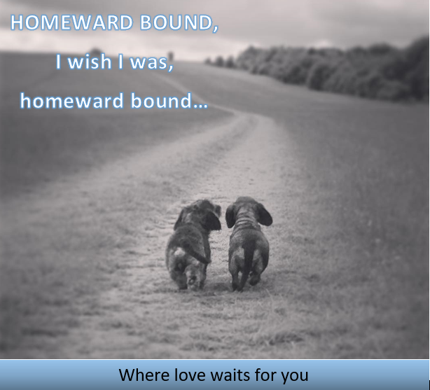Homeward Bound Animal Rescue
