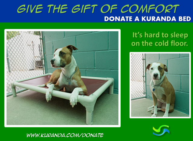 Kuranda Bed donation