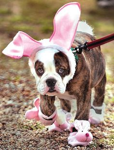 Easter1 boxer