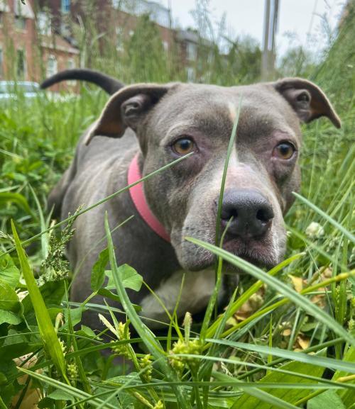 Adopt dog image