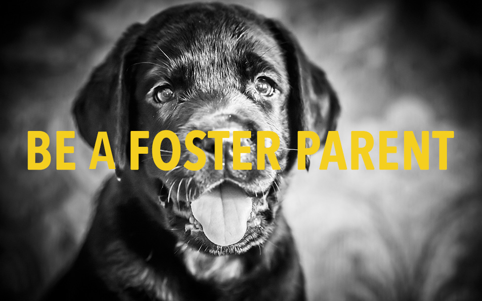 be a foster
