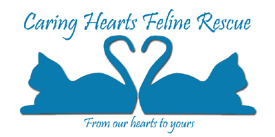 Caring Hearts Feline Rescue