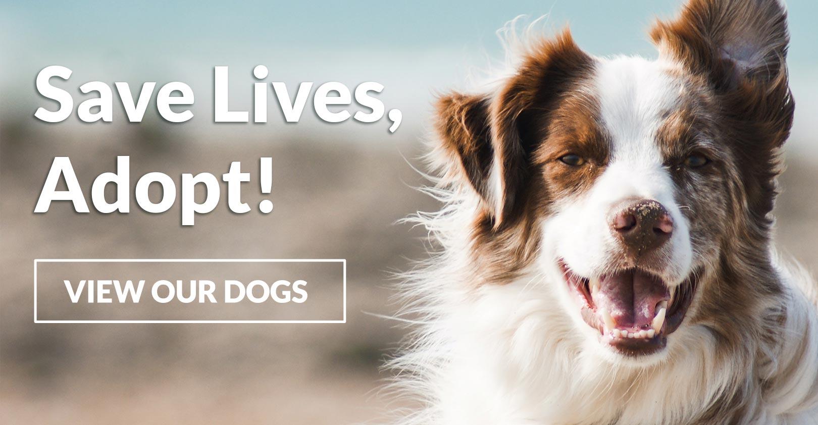 Save Lives - Adopt!