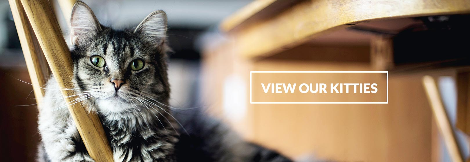 View Our Kitties