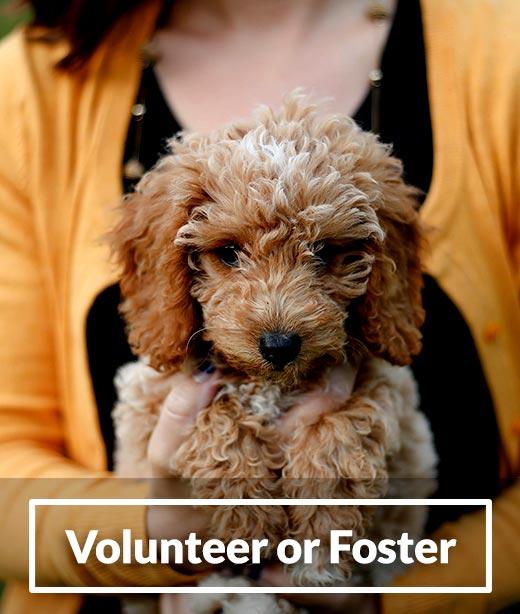 How to Volunteer or Foster