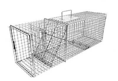 standard trap