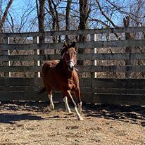Horse Sydney1