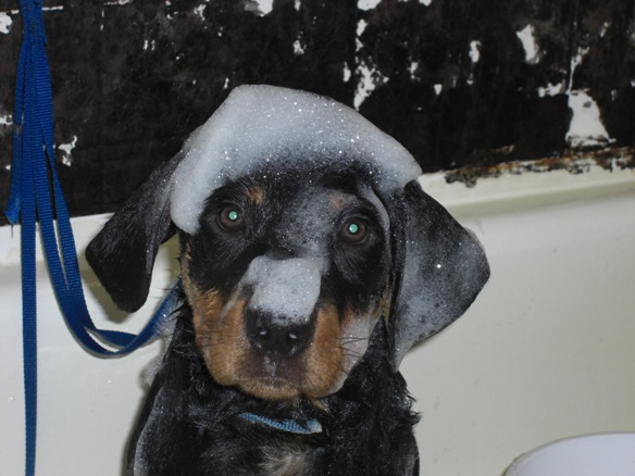 Dodger = Bath