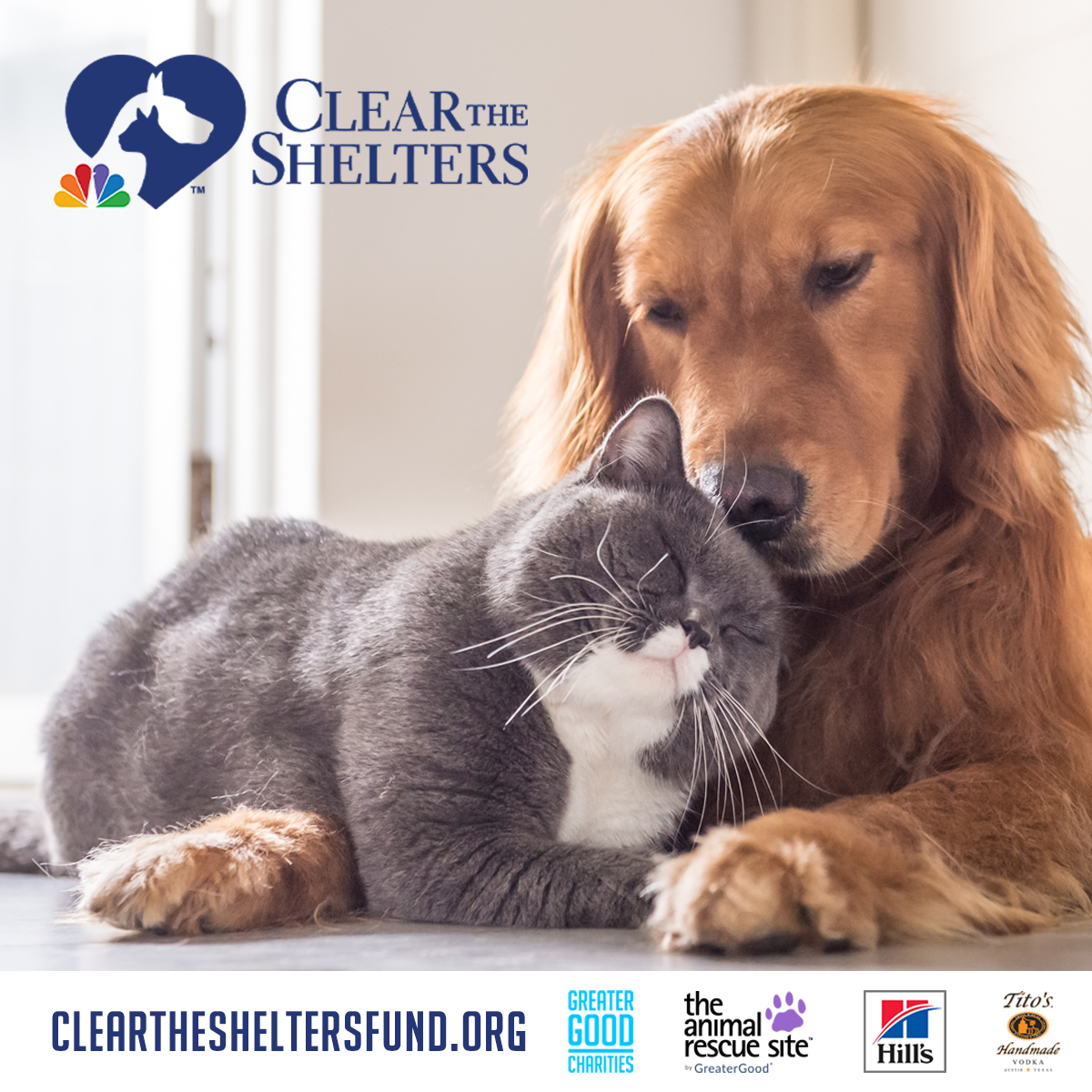 Cleartheshelters2021