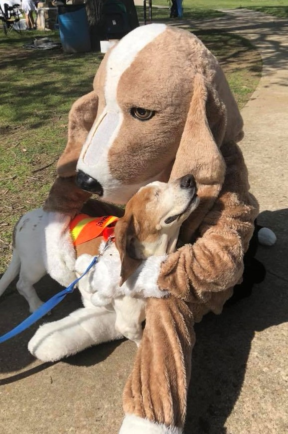 Welcome to North Texas Bassest Hound Rescue