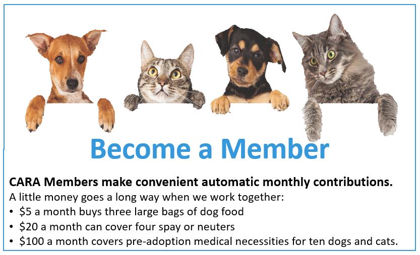Donate as a Member