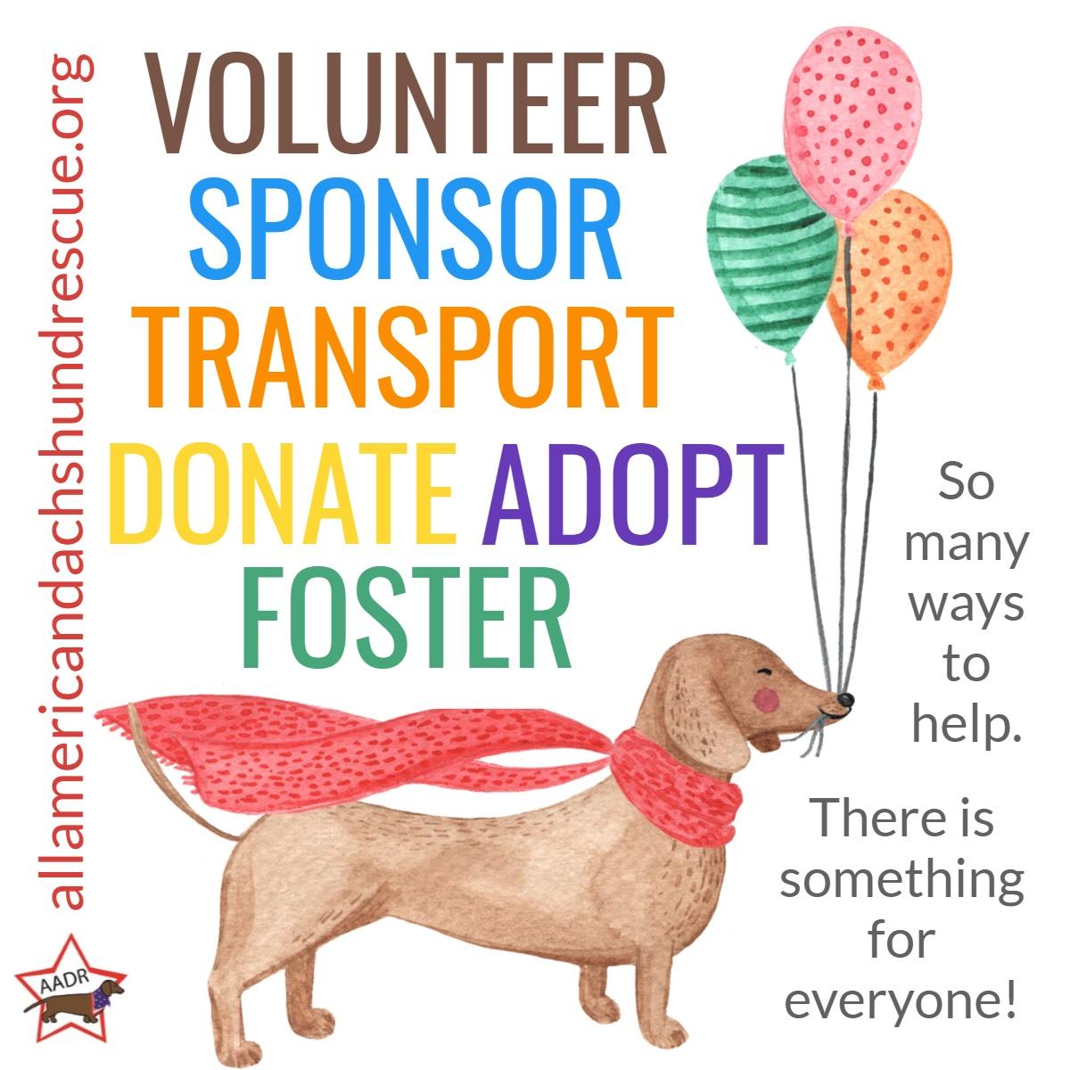 2020 Volunteer_Winter