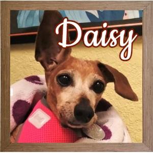 Daisy FP Photo_060221
