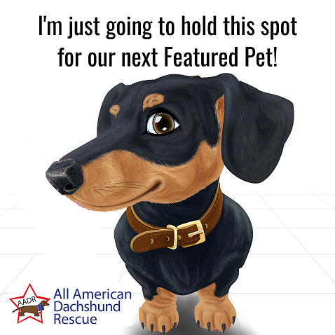 Featured Pet Place Holder