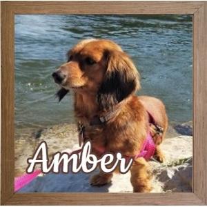 Amber FP Photo