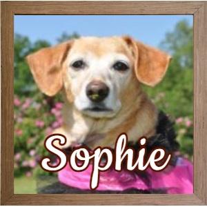 Sophie FP Photo