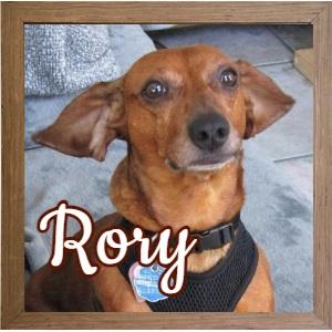 Rory_FP Photo