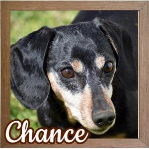 Chance FP Photo