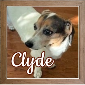 Clyde NY_FP Photo 2