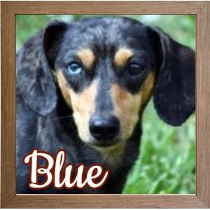Blue_FP Photo 2